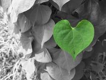 O coração é natureza Fotografia de Stock Royalty Free
