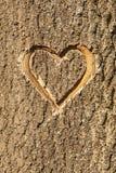 O coração cinzelou na casca de uma árvore. Fotos de Stock