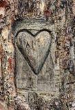 O coração cinzelou na casca de uma árvore fotografia de stock royalty free