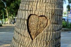 O coração cinzelou na palmeira Foto de Stock