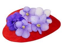 O coração cobriu flores naturais do saintpaulia Foto de Stock