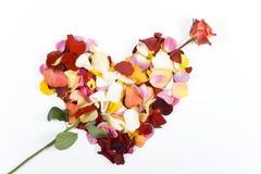 O coração com a seta de levantou-se Fotografia de Stock