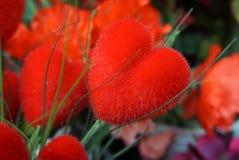 O coração da cor vermelha deu forma à flor colorida bonita fotografia de stock royalty free
