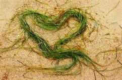 O coração da grama do mar. Fotos de Stock Royalty Free