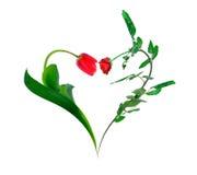 O coração de um tulip e levantou-se Imagem de Stock Royalty Free