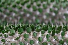 O coração deu forma às folhas com espinhos imagem de stock