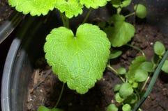 O coração deu forma ao crescimento novo fotos de stock royalty free