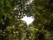 O coração deu forma ao furo nas árvores no Mokarot Emerald Cave em Ko Muk, Ko Lanta, Tailândia fotografia de stock