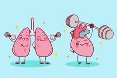 O coração e o pulmão ostentam Fotos de Stock Royalty Free