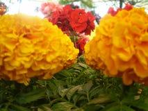O coração floresce a coleção Imagem de Stock Royalty Free
