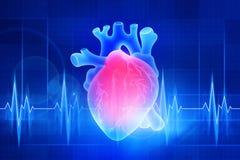 O coração humano Ilustração de Digitas em um fundo azul ilustração stock
