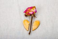 O coração quebrado das cookies caseiros e secado aumentou Imagens de Stock Royalty Free