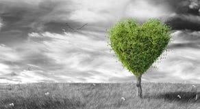 O coração verde deu forma à árvore no fundo ajardinado preto & branco Fotos de Stock