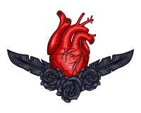 O coração vermelho dos Valentim com pena e aumentou Ilustração do vetor Imagens de Stock