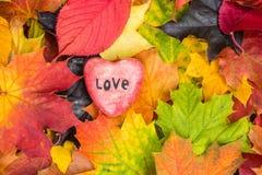 O coração vermelho nas folhas de bordo misturou o fundo das cores da queda Imagens de Stock