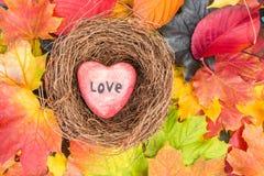 O coração vermelho no ninho nas folhas de bordo misturou o fundo das cores da queda Foto de Stock
