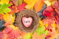 O coração vermelho no ninho nas folhas de bordo misturou o fundo das cores da queda Fotografia de Stock