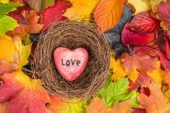 O coração vermelho no ninho nas folhas de bordo misturou o fundo das cores da queda Imagens de Stock