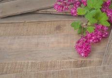 O corinto bonito e brilhante floresce em placas de madeira rústicas com sala, espaço ou área vazia para a cópia, o texto, ou as su Foto de Stock Royalty Free