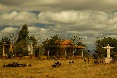 O corpo animal alimenta abutres na seca dos backlands de Bahian ao lado do christ resgatando fotos de stock