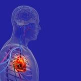 O corpo humano (órgãos) por raios X no fundo azul ilustração stock