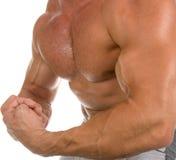 O corpo masculino perfeito Fotografia de Stock
