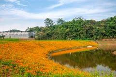 O corredor da flor do jardim do mundo em Banan, Chongqing Fotos de Stock Royalty Free