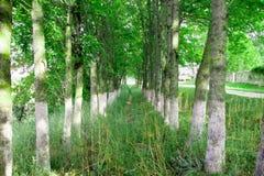 O corredor das árvores imagens de stock royalty free
