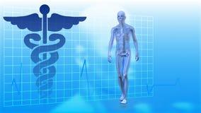 O corredor de esqueleto que anda contra o doutor assina no fundo ilustração do vetor