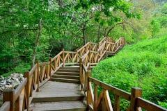 O corredor de madeira da floresta Fotos de Stock Royalty Free