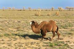 O corredor do deserto ilimitado Fotos de Stock Royalty Free