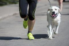 O corredor irreconhecível e um cão na cidade competem imagens de stock