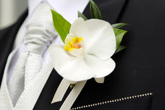 O Corsage do noivo Foto de Stock Royalty Free