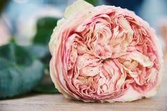 O corte aumentou configurações em um vaso ou em uma cadeira de vime, único botão da rosa cor-de-rosa imagem de stock royalty free