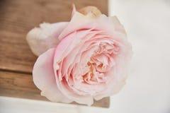 O corte aumentou configurações em um vaso ou em uma cadeira de vime, único botão da rosa cor-de-rosa foto de stock