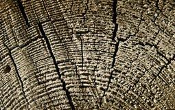 O corte da árvore velha Fotos de Stock