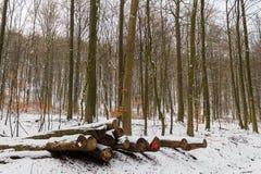 O corte entra a neve na floresta marcada como biológica fotografia de stock royalty free
