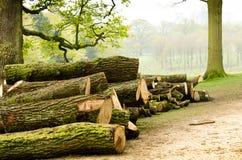 O corte fresco entra o ajuste da floresta Fotos de Stock