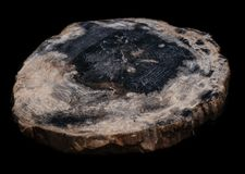 O corte lustrou a madeira hirto de medo no fundo preto imagens de stock royalty free
