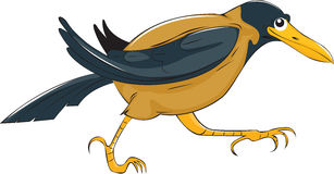 O corvo Fotografia de Stock Royalty Free