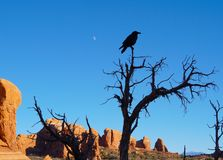 O corvo, as rochas, e a lua imagens de stock