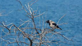 O corvo e o mar vídeos de arquivo
