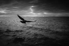 O corvo e o mar Foto de Stock Royalty Free