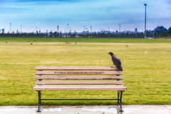 O corvo no banco Imagem de Stock