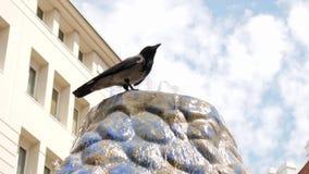 O corvo senta-se na fonte com água transparente no dia de verão quente fora video estoque