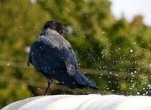 O corvo toma um banho em uma fonte Fotografia de Stock Royalty Free