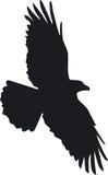 O corvo voa Foto de Stock