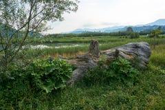 O coto de árvore encontra-se na terra foto de stock