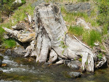 O coto de árvore no banco do rio Imagens de Stock Royalty Free
