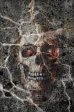 O crânio Fotografia de Stock